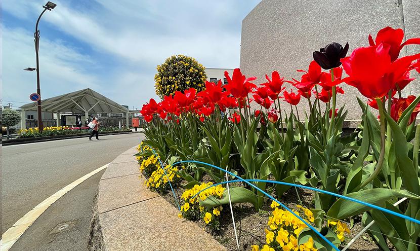 チューリップフェア開催、富山県初のブルーインパルス展示飛行、網戸快適ネットからの景色。