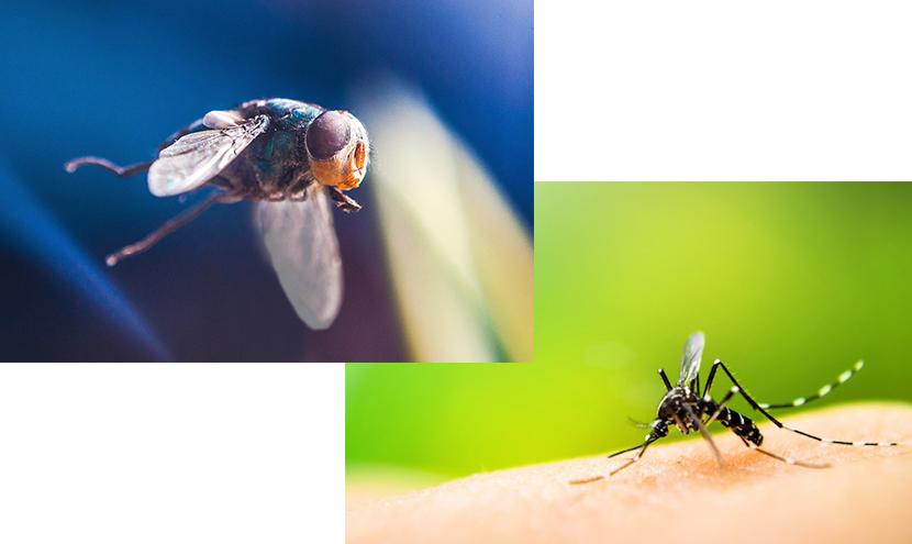 網戸はいるのか?いらないのか?130種類の蚊と480種類の蝿が生息している。